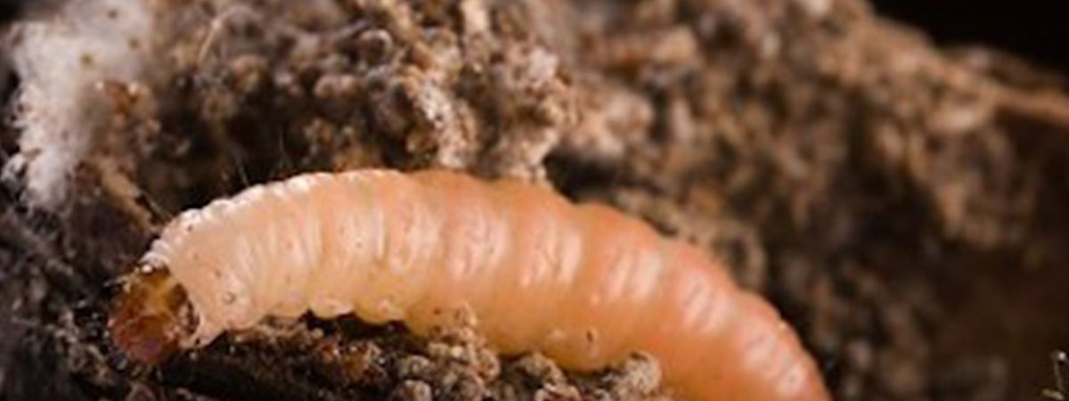 Orangeworm Hacker Group Targets Healthcare with Kwampirs Trojan